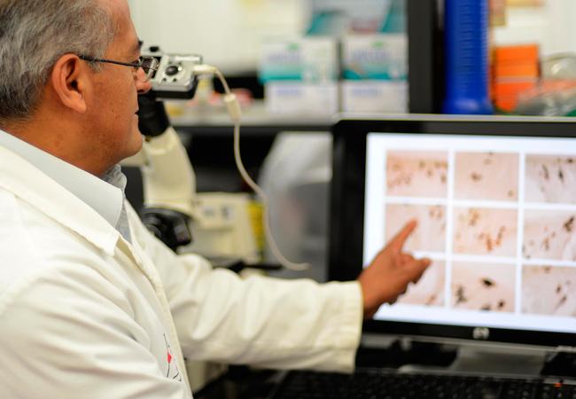 Las gónadas tienen neuronas - Benemérita Universidad Autónoma de Puebla